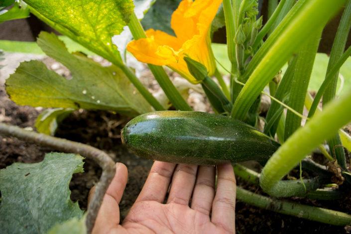 Garten, Erholung in der Natur, Hasliberg, Hotel Gletscherblick